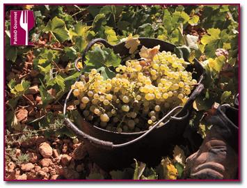 PabloD Gourmet - Uvas en la vendimia