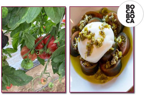 PabloD-Gourmet - BOCABOCA acerca las mejores materias primas del huerto a la mesa